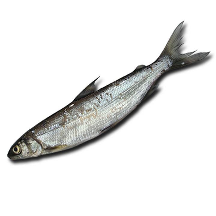 Рыба тугун, фото