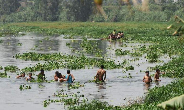 Водоросли в реке Нил загромождают русло, фото