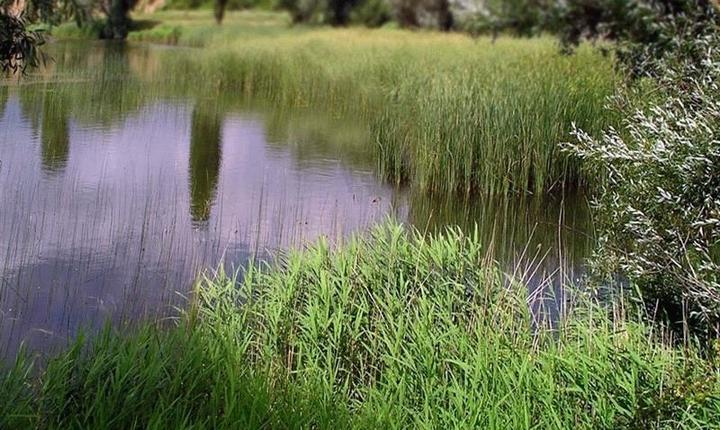 Река Зуя, фото
