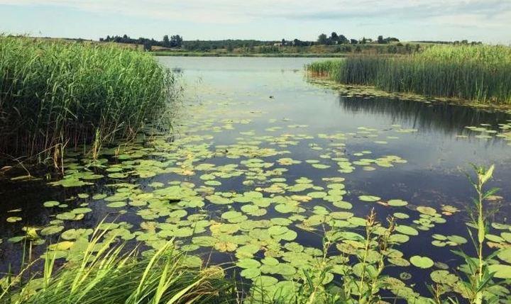 Озеро Михалевское, фото