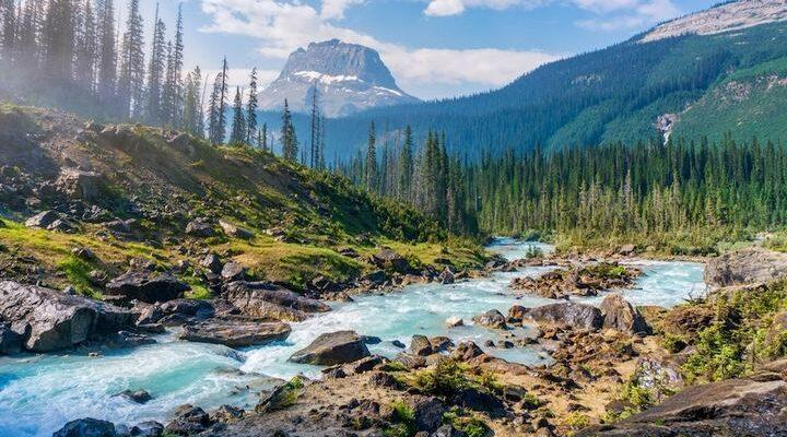 Природа тест по окружающему миру, фото