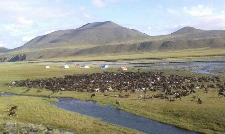Миграция оленей в Якутии, фото